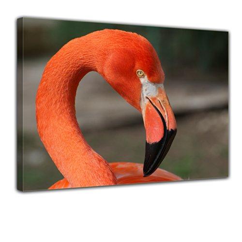 "Bilderdepot24 Leinwandbild ""Flamingo"" - 70x50 cm 1 teilig - fertig gerahmt, direkt vom Hersteller"