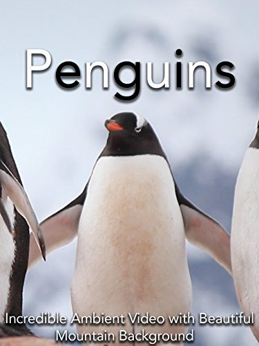 Penguins Incredible Ambient Video with Beautiful Mountain Background