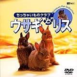 ウサギとリス/ちっちゃいものクラブ [DVD]