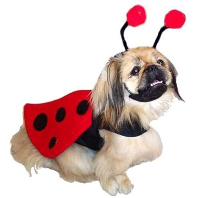 Dog Costume - Ladybug Pet Costume - Medium