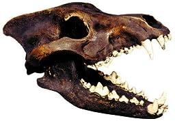 Dire Wolf Skull Replica