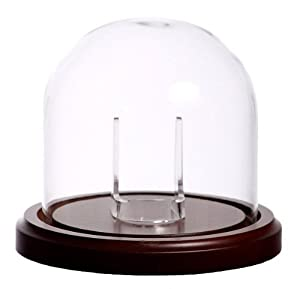 Large Glass Pocket Watch Display Dome with Walnut Base