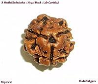 3 Mukhi Rudraksh / Three Face Rudraksha - Nepal - Lab Certified