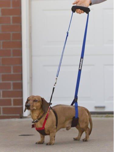 gingerlead dog support harness police dog harness elsavadorla. Black Bedroom Furniture Sets. Home Design Ideas
