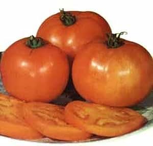 ungarische samen tomate grosse orange biologischen anbau volles aroma garten. Black Bedroom Furniture Sets. Home Design Ideas