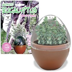 Aromatic Eucalyptus - Buy Aromatic Eucalyptus - Purchase Aromatic Eucalyptus (DuneCraft, Toys & Games,Categories,Learning & Education)