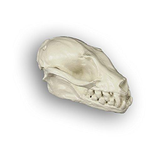 Elope Bat Skull Pendant Necklace