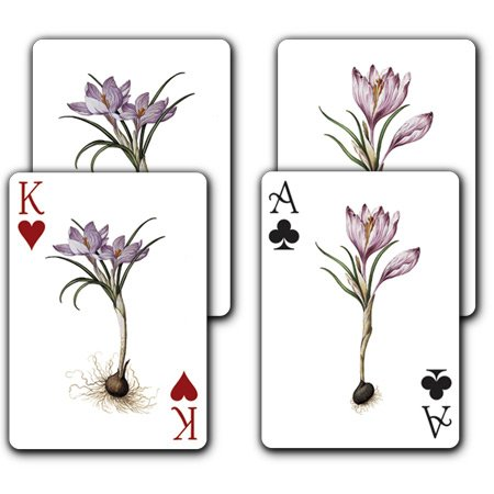 Breath of Spring - Double Deck Playing Cards - 1