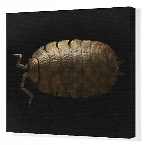 Canvas Print Of Lrds-148 Common Rough Woodlouse From Ardea Wildlife Pets