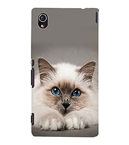 printtech Cute Cat Kitten Blue Eyes Back Case Cover for Sony Xperia M4 Aqua::Sony Xperia M4 Aqua Dual