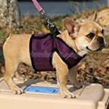 Alcoa Prime Breathable Mesh Pet Puppy Dog Walking Collar Chest Strap Harness Purple M