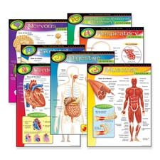 TEP38913 - Trend The Human Body Learning Chart