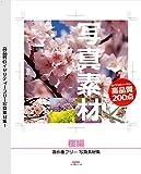 写真素材 ~桜編~