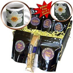 Patricia Sanders Flowers - Spring Daffodil- Flowers- Photography - Coffee Gift Baskets - Coffee Gift Basket