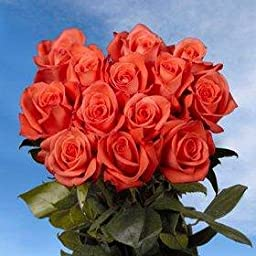 100 Salmon-Orange Roses | Movie Star Roses | Fresh Flowers Express Delivery | Perfect for Birthdays, Anniversary or any occasion.