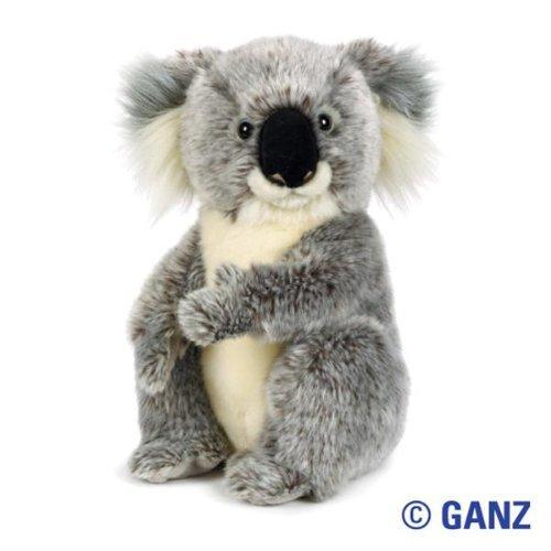 how to buy a koala bear