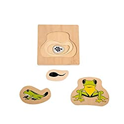 Montessori Materials Frog Development Puzzle for Early Preschool Learning Toy