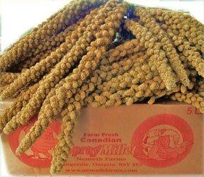 Worlds Freshest Spray Millet 5 Pound Box Nemeth Farms The Original