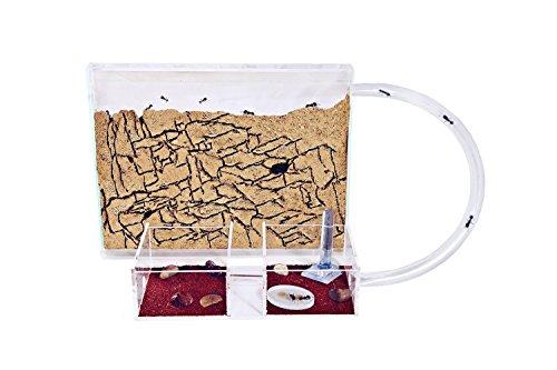 fourmiliere-kit-medium-en-sable-avec-les-fourmis-et-reine-gratuites
