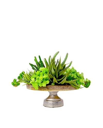 Creative Displays Inc. Assorted Succulent Pedestal Arrangement, Green