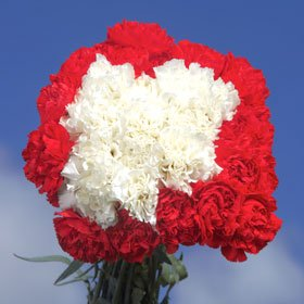 Christmas Color Carnations 200