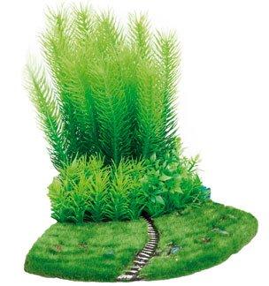 arbustes-plantes-pour-aquarium