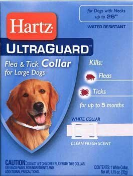 Best Cheap Flea And Tick Treatment For Dogs