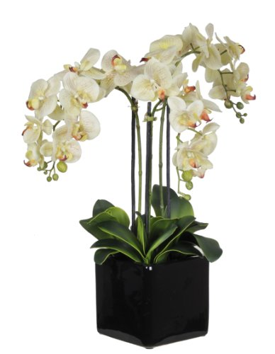 Artificial Triple-stem Phalaenopsis Orchid Arrangement Cream/burgundy