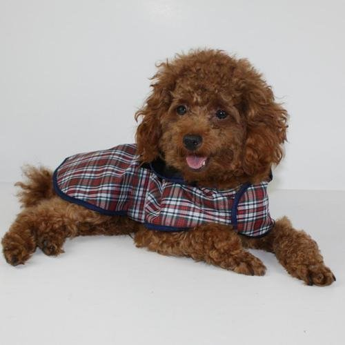Pawz Road Hund kariert Regenmantel S -