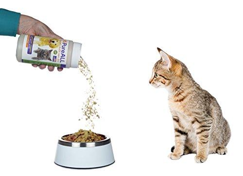 cat behavior tail flicking