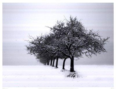 Winter Tree Line I by Ilona Wellman