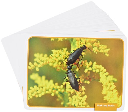 Edupress 32 Piece Reading Comprehension Science Cards Set with Insect Theme