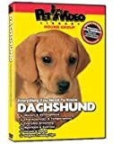 Dachshund DVD - Everything You Should Know About Your Dog