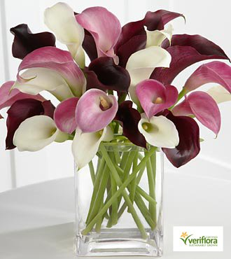 Amethyst Riches Calla Lilies Flower Bouquet - 24 Stems - VASE INCLUDED