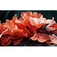 Vrct Red Shade Flower String Light (Multicolor)