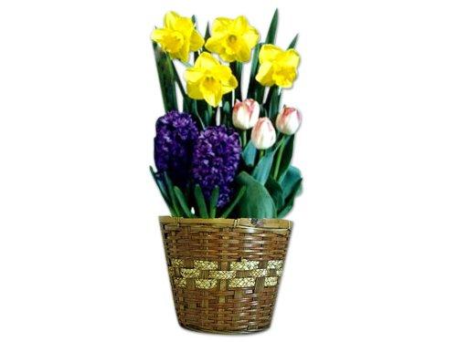 Flower Bulb Gift Baskets : Monthly birthday flowers