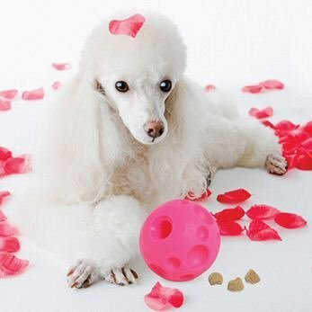 Glamour Treat Ball by Omega Paws (Omega Ball compare prices)