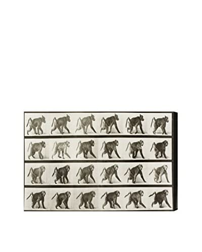 """Oliver Gal """"Baboon In Motion"""" Canvas Art"""