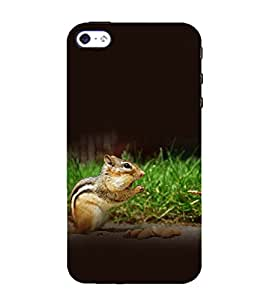 printtech Squirrel Nut Nature Back Case Cover for Apple iPhone 4S