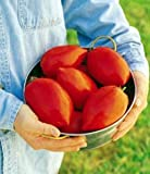 Burpee Big Mama Hybrid Tomato -25 Seeds- Enormous Paste