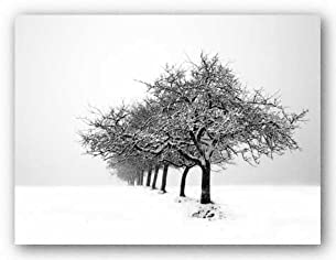 Winter Tree Line I by Ilona Wellman