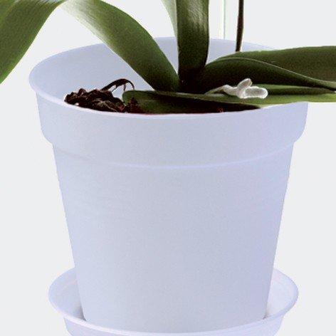 elho-2055290-conceptos-basicos-de-orquideas-verdes-del-maceta-creciente-transparentes-de-13-x-13-x-1