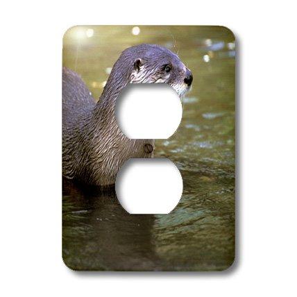 Lsp_86996_6 Danita Delimont - Wildlife - Peru, Manu River Region. Giant River Otter Wildlife - Sa17 Gje0121 - Gavriel Jecan - Light Switch Covers - 2 Plug Outlet Cover