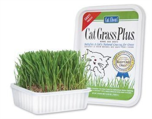 Image Cat-A'bout Multi-Cat CatGrass Plus Tub 150 grams by MiracleCorp/Gimborn