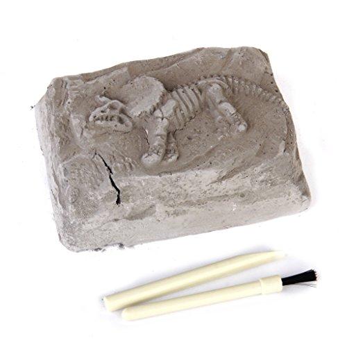 【ノーブランド品】恐竜化石 発掘 キット 教育玩具 発掘体験 骨格 標本 発掘 セット ティラノサウルスレックス 贈り物 考古学者 豪華版