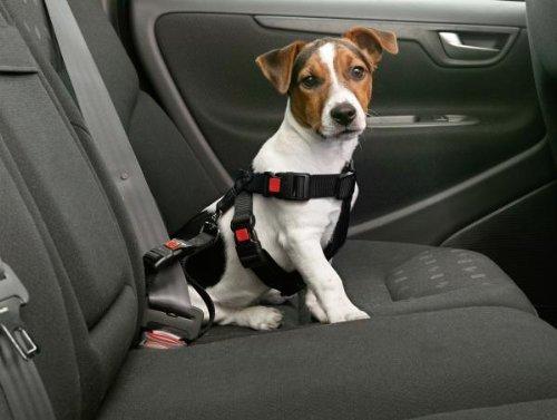 Karlie Car Dog Safety Harness XS 25-40 cm