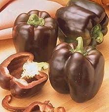 buy Pepper Sweet Chocolate Beauty Bell Great Heirloom Vegetable 10 Seeds
