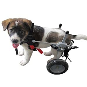 Small Dog Wheelchair Amazon