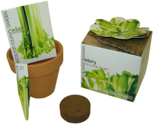 S.F. Imports GB-CELERY/MD Grow Your Own Medium Vegetable Kit, Celery