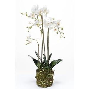 orchid e phalaenopsis artificielle pabla en motte blanche jaune 80 cm fleur artificielle. Black Bedroom Furniture Sets. Home Design Ideas